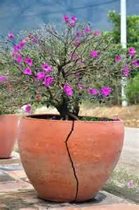 cracket pot